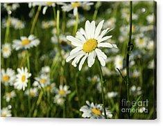 Acrylic Print featuring the photograph Summer Beauty by Kennerth and Birgitta Kullman