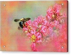 Summer Bee Acrylic Print