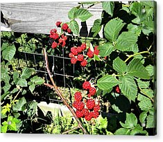 Summer Blackberries Acrylic Print