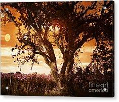 Summer Blaze Acrylic Print by Leslie Hunziker
