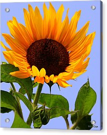 Summer Bliss Acrylic Print by DazzleMe Photography