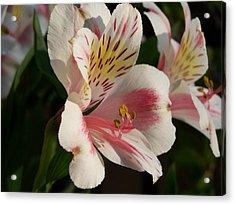 Summer Bloom II Acrylic Print by Jake Hartz
