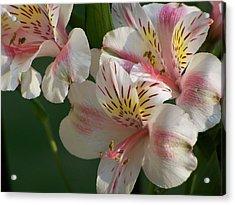 Summer Bloom IIi Acrylic Print by Jake Hartz
