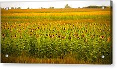 Summer Blooms Acrylic Print by Robert  McCord