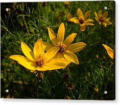 Summer Blossums Acrylic Print by Ali Dover