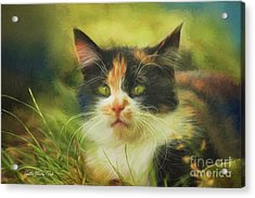 Acrylic Print featuring the photograph Summer Cat by Jutta Maria Pusl