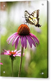 Acrylic Print featuring the photograph Summer Colors by Everet Regal
