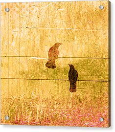 Summer Crows Acrylic Print by Carol Leigh