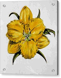Summer Daylily Acrylic Print by Dy Witt