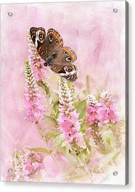 Acrylic Print featuring the photograph Summer Daze by Betty LaRue