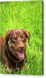 Summer Dog Acrylic Print