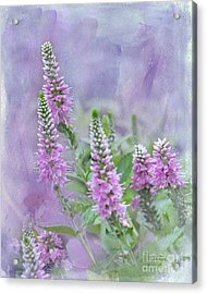Acrylic Print featuring the photograph Summer Dreams by Betty LaRue