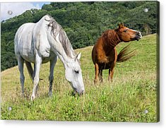 Acrylic Print featuring the photograph Summer Evening For Horses by D K Wall