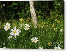 Acrylic Print featuring the photograph Summer Feeling by Kennerth and Birgitta Kullman