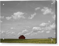 Summer Fields II Acrylic Print