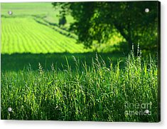 Summer Fields Of Green Acrylic Print by Sandra Cunningham