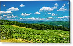 Acrylic Print featuring the photograph Summer Fields by Steven Ainsworth