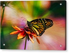Summer Floral With Monarch Butterfly 03 Prism Acrylic Print by Thomas Woolworth