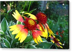 Acrylic Print featuring the photograph Summer Flowers 3209 by Maciek Froncisz