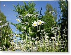 Acrylic Print featuring the photograph Summer Flowers by Kennerth and Birgitta Kullman