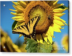 Summer Friends Acrylic Print