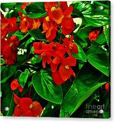 Summer Geranium Acrylic Print by Marsha Heiken