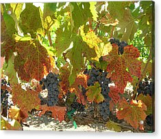 Summer Grapes Acrylic Print by Bonnie Muir