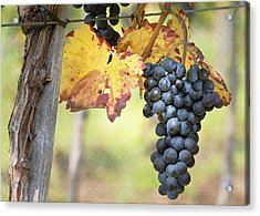 Summer Grapes Acrylic Print by Sharon Foster