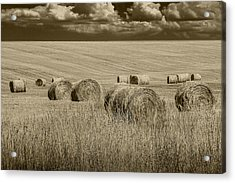 Summer Harvest Field With Hay Bales In Sepia Acrylic Print by Randall Nyhof