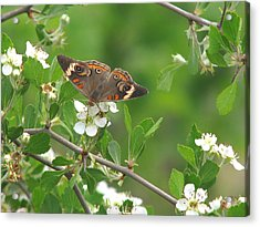 Acrylic Print featuring the photograph Summer Haw In Spring by Peg Urban