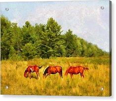 Summer Hay Burners Acrylic Print