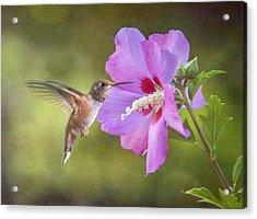 Summer Humming Acrylic Print