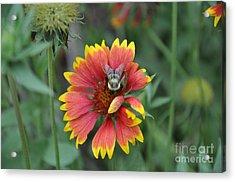 Summer Acrylic Print by Jo Thompson Pennypacker