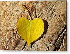 Summer Love Heart Shaped Leaf Acrylic Print