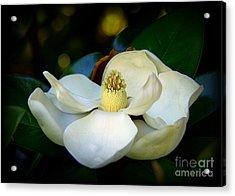 Summer Magnolia Acrylic Print by Lisa L Silva