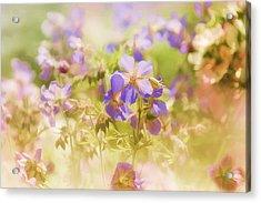 Summer Meadow Acrylic Print by Elaine Manley