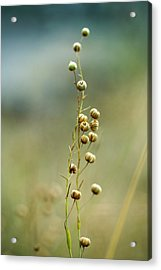 Summer Meadow Acrylic Print