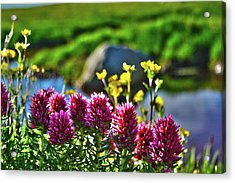 Acrylic Print featuring the photograph Summer Morning Blossoms by Marie Leslie