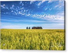 Summer On The Prairies Acrylic Print by Ian McGregor