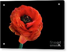 Acrylic Print featuring the photograph Summer Orange by Darren Fisher