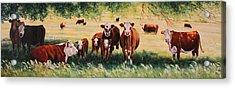 Summer Pastures Acrylic Print