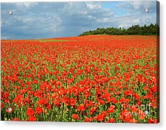 Summer Poppies In England Acrylic Print