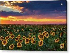 Summer Radiance Acrylic Print