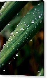 Summer Rain Acrylic Print by Alexandra Harrell