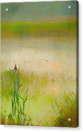 Summer Reeds Acrylic Print