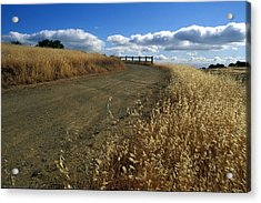 Summer Road Acrylic Print by Kathy Yates