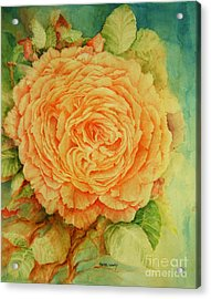 Summer Rose Acrylic Print by Rachel Lowry
