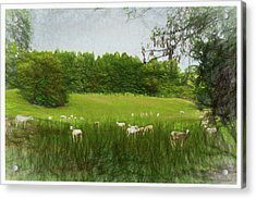 Acrylic Print featuring the digital art Summer Sheep by Barry Jones