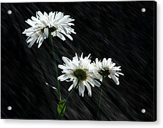 Summer Showers Acrylic Print by Barbara  White