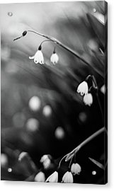 Summer Snowflakes Acrylic Print by Daniel Lih
